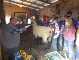 Students Learn About Ultrasounding Ewes